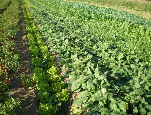 Agricultura ecológica, ventajas y desventajas
